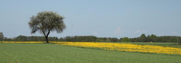 Boom in het landschap