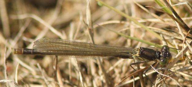 nvl-01D_2235-crop-sh