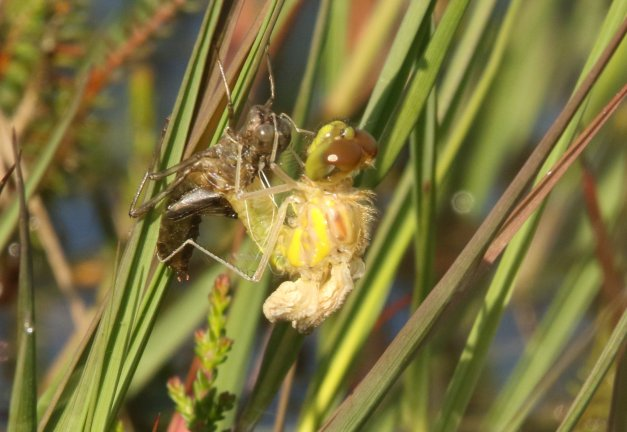 blog-07D_3044-crop