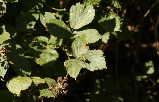blog-BR5A1182-crop