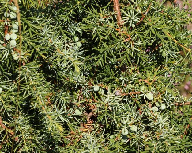 wnl-BR5A9496-crop-kleiner