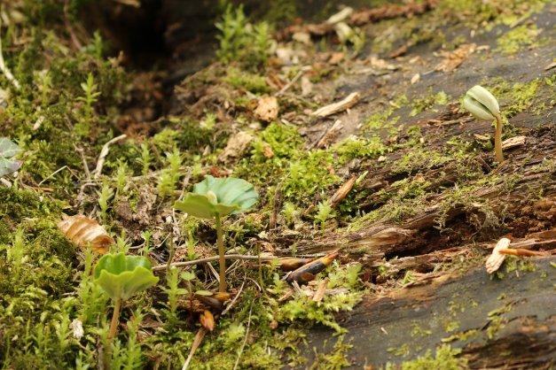 blog-07D_4839-crop