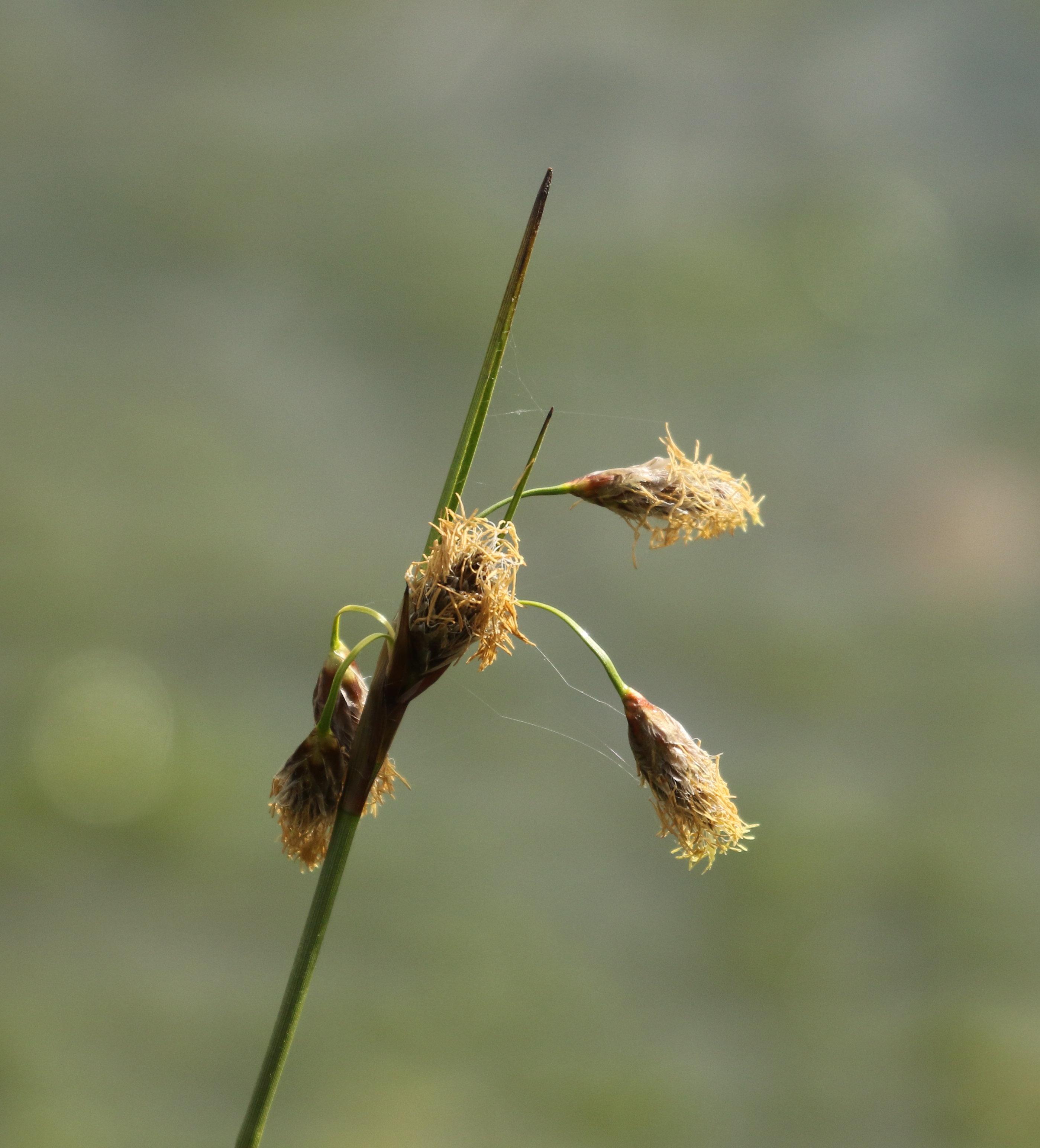 blog-07D_5037-crop