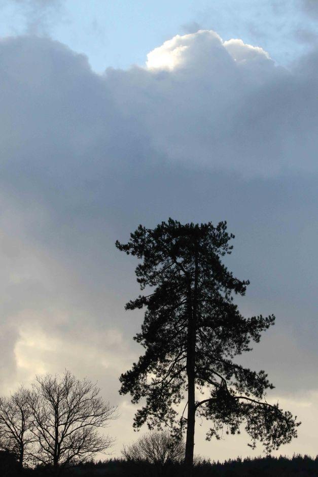 blog- (307D_7226 van 91)7226
