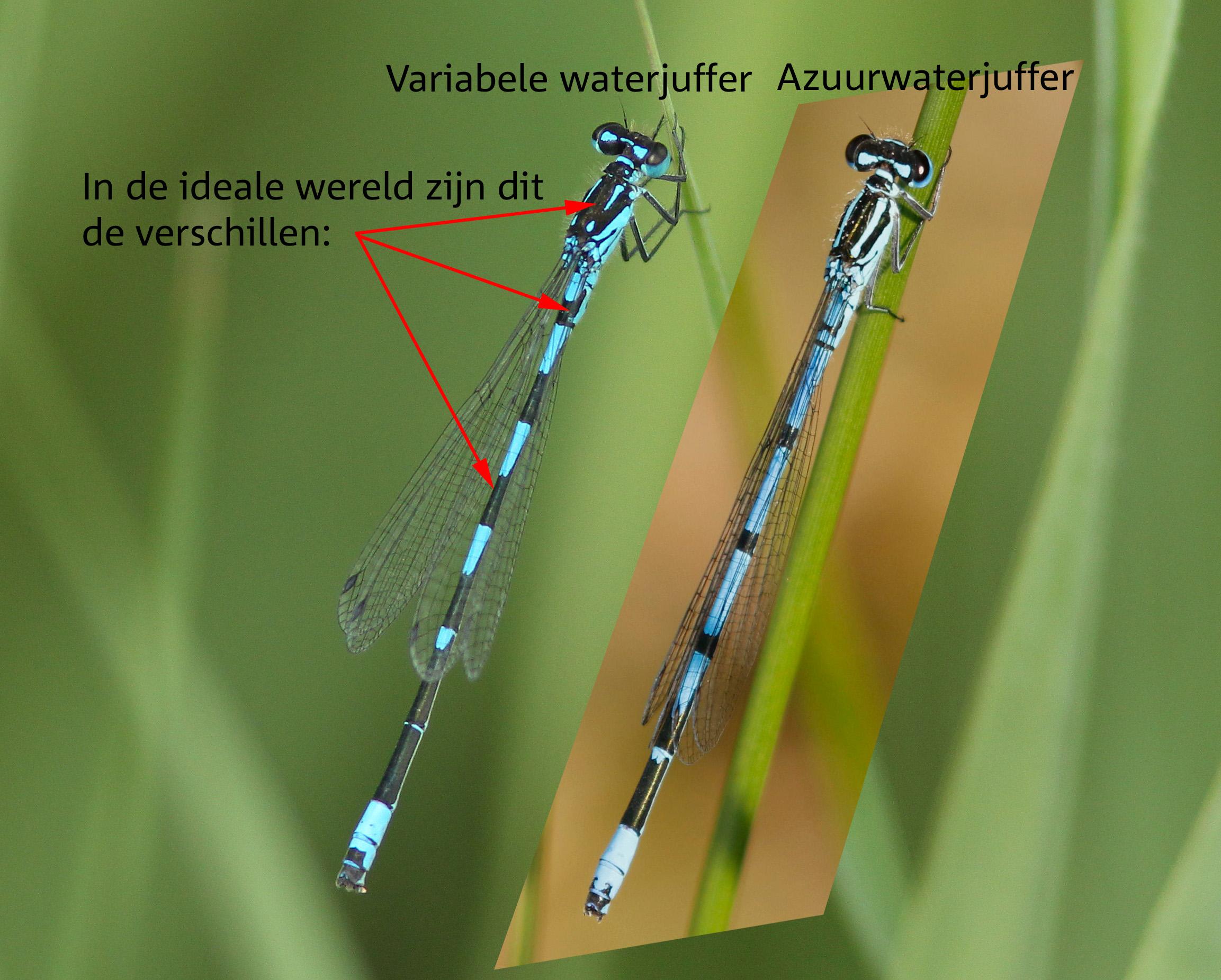 variabele waterjuffer2